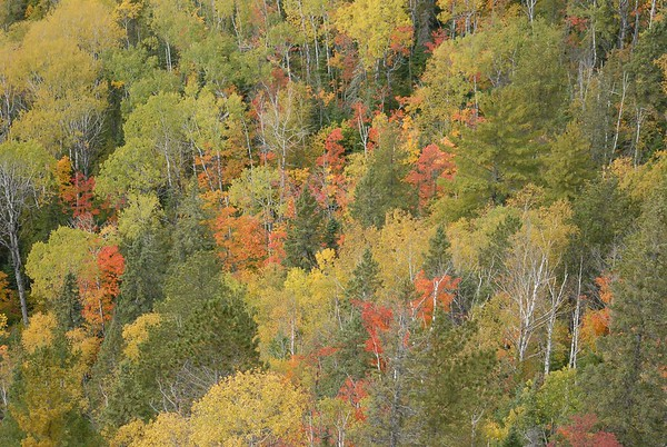 small_subtle_mix_of_aspen_birch_white_spruce_and_white_pine_20100922__202.jpg