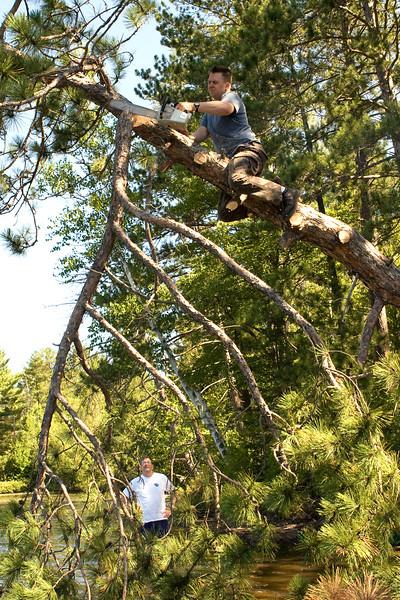 Tree Falling 2