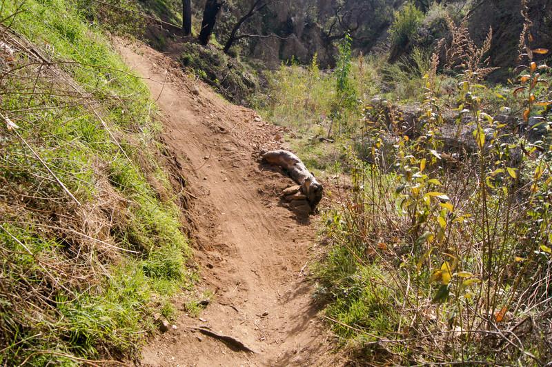 201201291592-El Prieto Trailwork.jpg