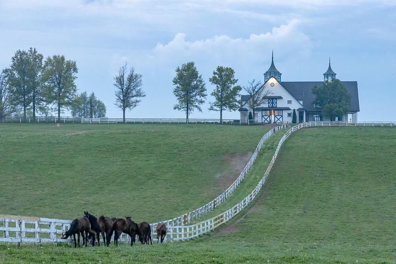 Manchester Horse Farm Lexington KY  April 25, 2019   008.jpg