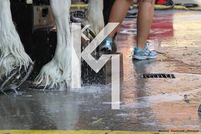 Open Horses Clydesdale & Percheron - Day 1
