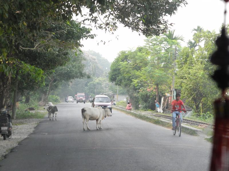 india&nepal2011 142.jpg
