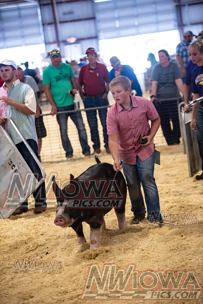 Sunday Swine show