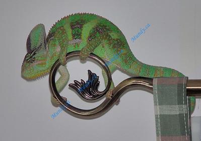 Chameleon MIA