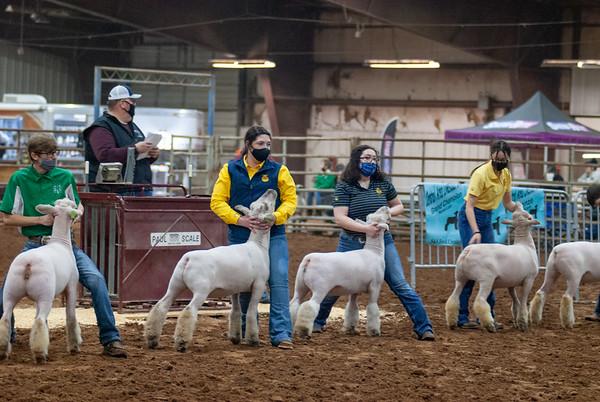 Central Area Sheep Show 2021