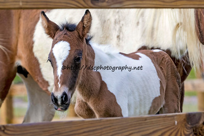 Seaside Miracle's Colt