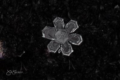snowflakes-1591.jpg