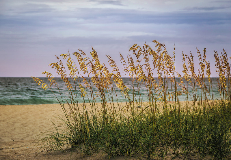 20130702-HDR_seagrass.jpg