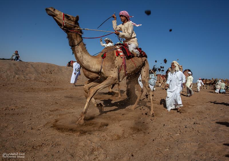 camels (59) copy.jpg
