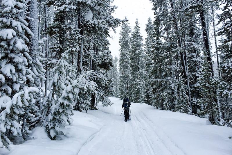 Lone Star Geyser Trail