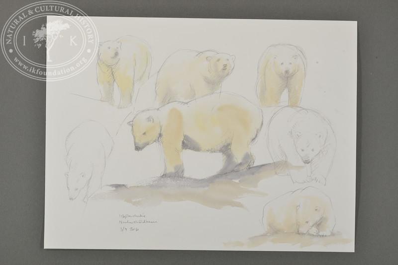 Study of polar bear, Nordenskiöldbreen, Svalbard | 3.9.2016  | Måns Sjöberg.