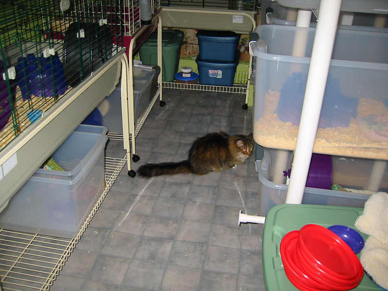 Kitties Explore the Facility  Kitties Explore the Facility  Filename reference: 20040505-004457-HAH-Hedgehog_Facility-SM