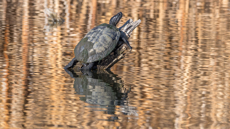 00 0053 Belmar Turtle 16x9.jpg