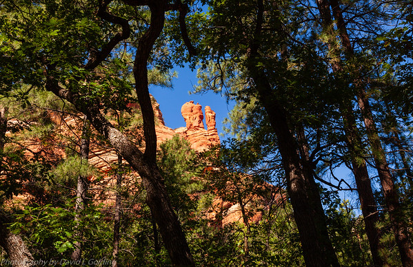 Coconino National Forest (AZ) Collection