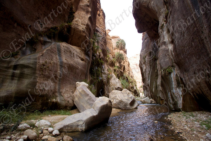 IMG_1060 Zered wadi- Jordan.jpg