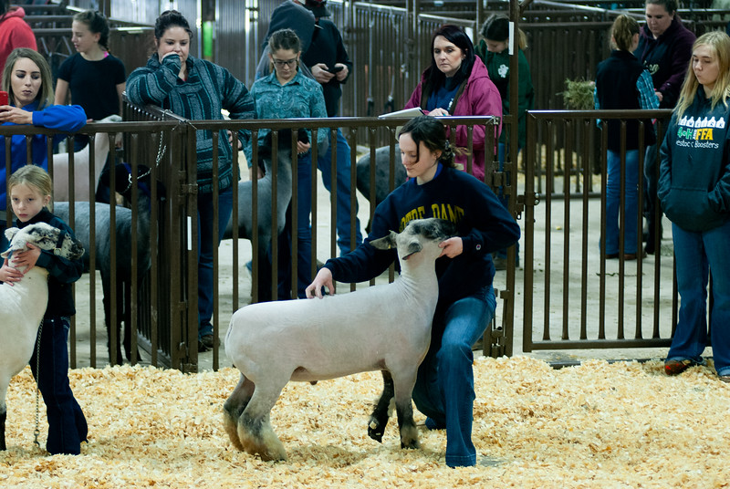 kay_county_showdown_sheep_20191207-64.jpg