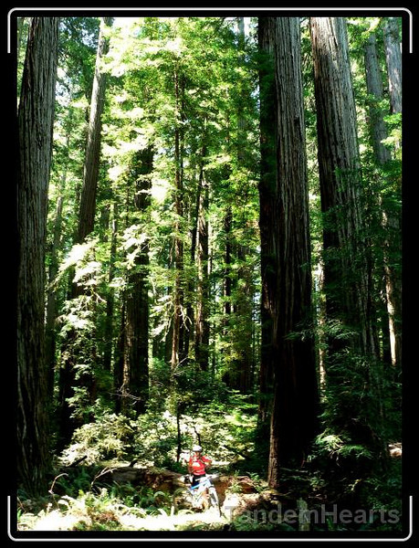 day-0-big-trees.jpg