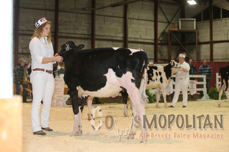 Atlantic Spring Holstein 2016