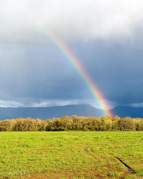 Road to the Rainbow.jpg