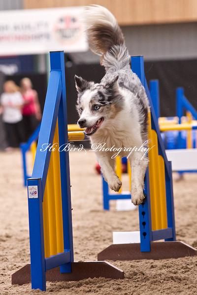 Large dog jumping  1096.jpg