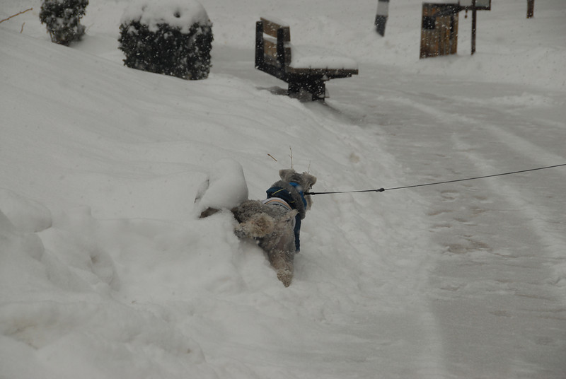 [20100103] 1st 2010 Snow in Beijing (37).JPG
