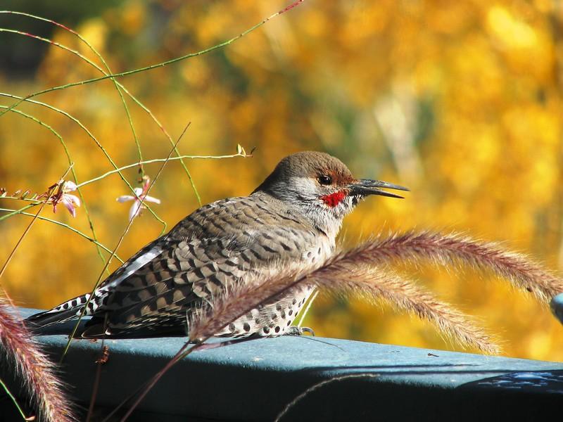birds (148).jpg