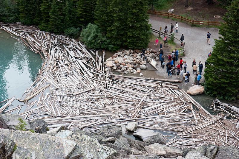 Driftwood on Moraine Lake