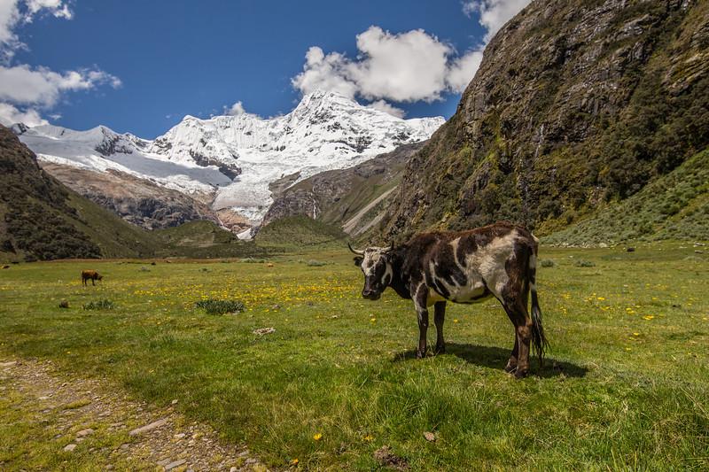 Peru Photos-44.jpg