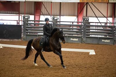 Horse 195