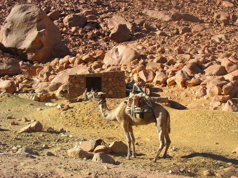 Egypt-755.jpg