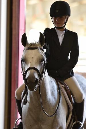 Modern Arabian Horse Magazine