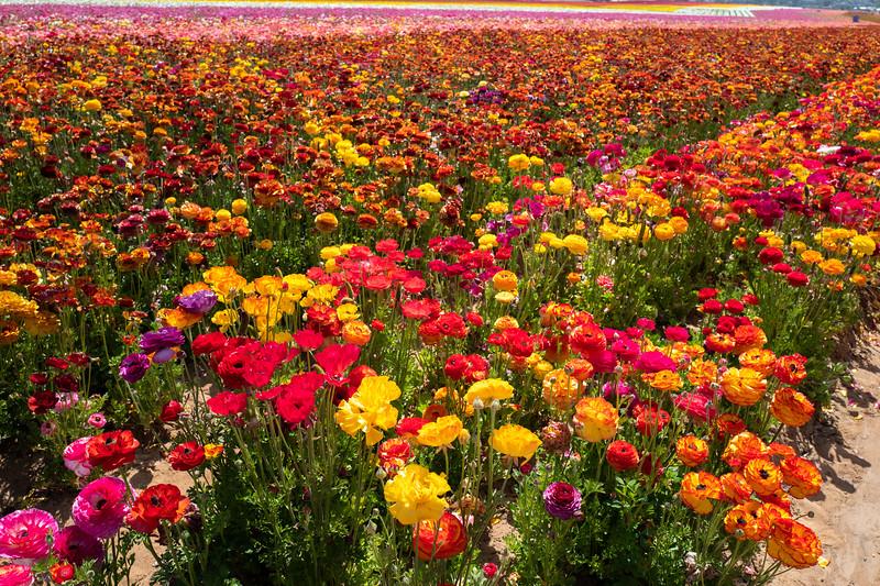 Spring Flowers A-161.jpg