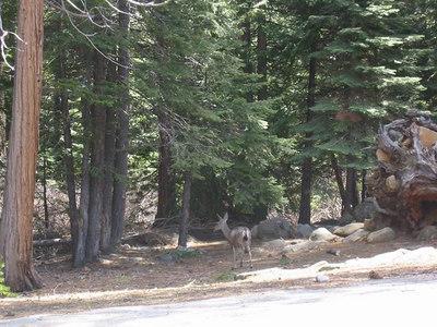 May 05: Yosemite