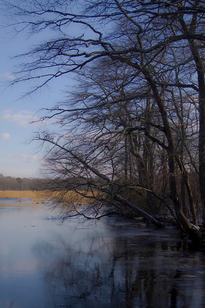 Wertheim National Wildlife Refuge, Shirley, N.Y. - 01/23/2011