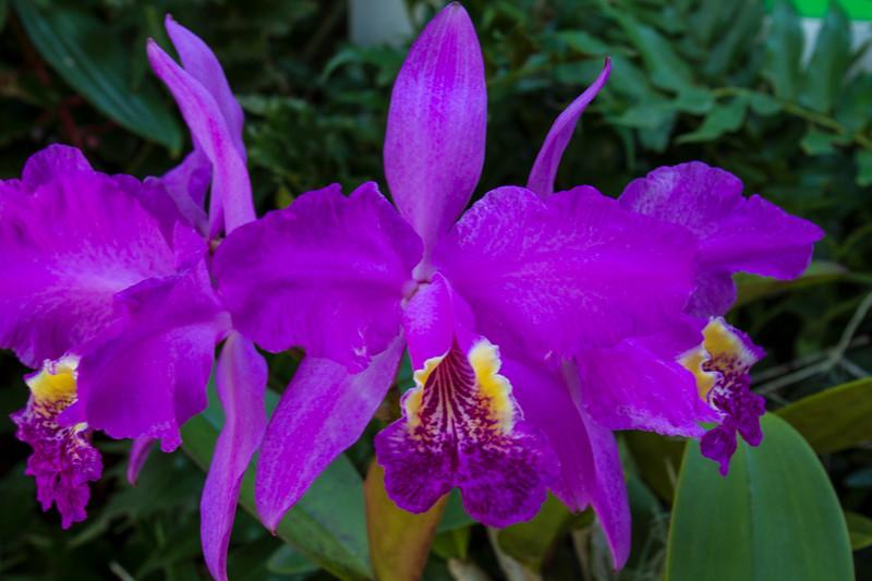 naples_botanical_garden_0064-LR.jpg