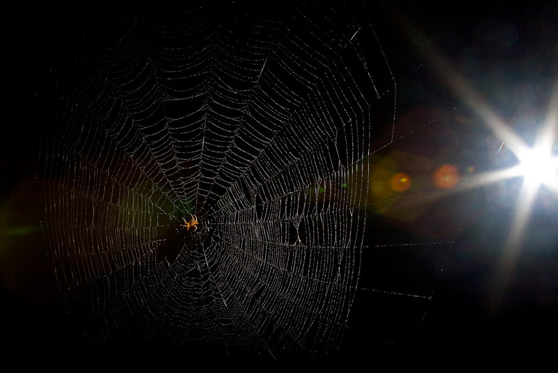 Spiderman-94.jpg