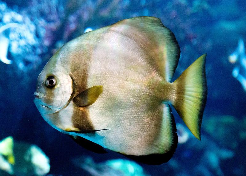 Back in the Aquarium.  More exotic fish.