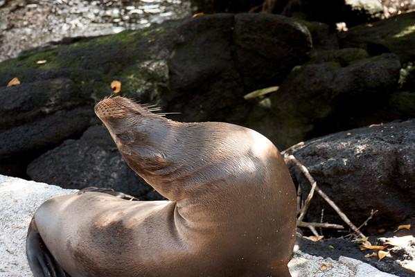 Journey into the Galapagos Day 3