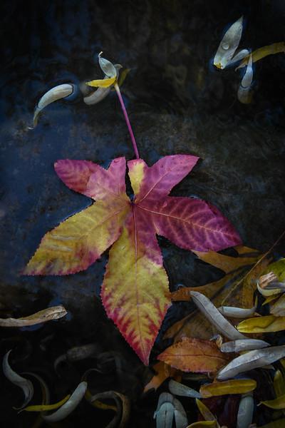 127.ElaineSoule.As.1.FleurDeLis.jpg