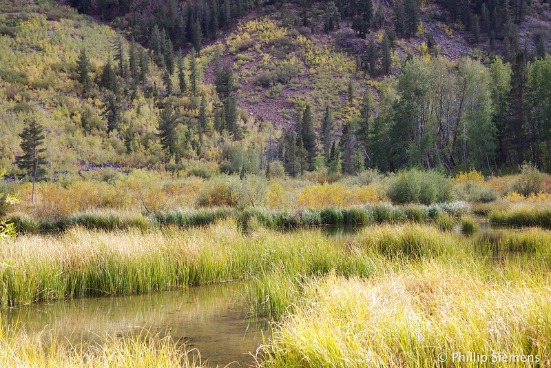Beaver Pond at Lundy Lake