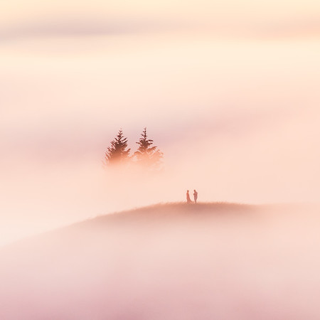 Fog Photography Prints