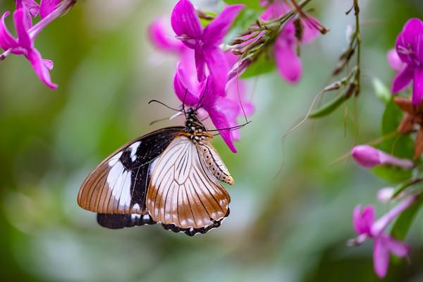 flitter, flutter, butterfly! 2020