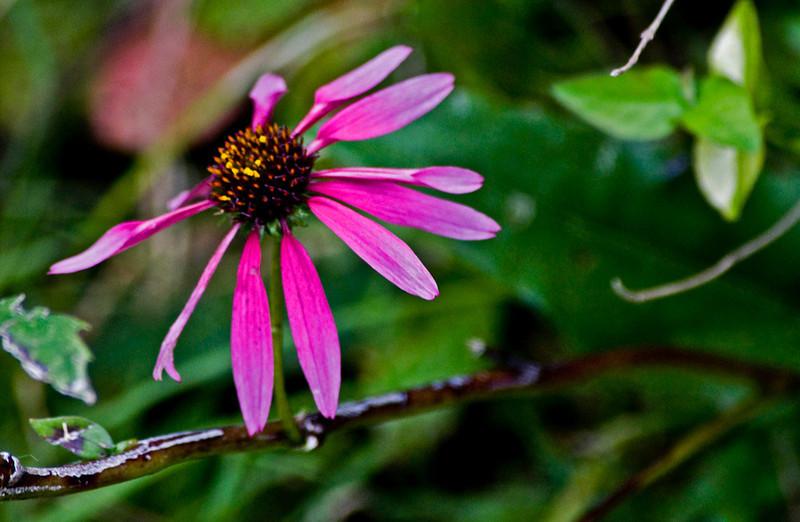 clip-015-flower-wdsm-17sep11-5874.jpg