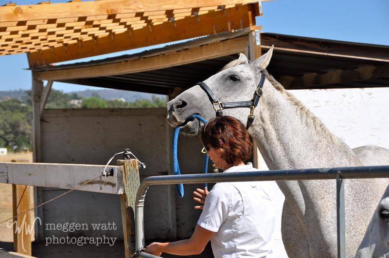 EB&Horses-031.jpg