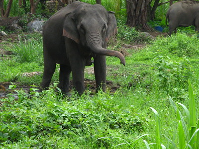 Patara & Mae Sa Elephant Camps