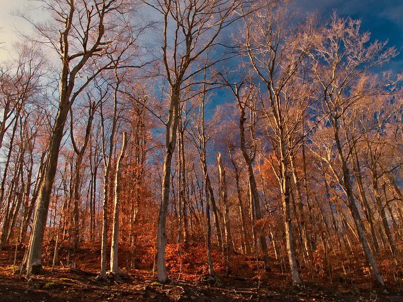 M-P-98-November  Woods.jpg