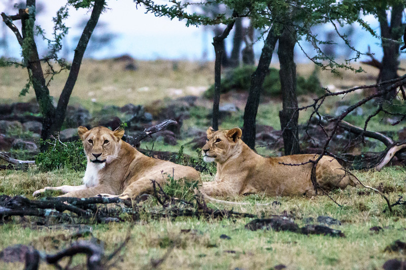 Kenya 2015-08614.jpg