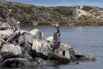Elkhorn Slough Safari