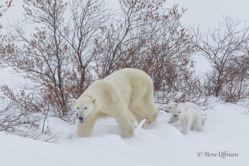 20160226-_M2A0016Spirit-Bears-British-Columbia.jpg