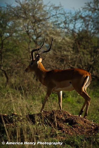 TANZANIA WEB EDITS November 2012 (348 of 732).JPG